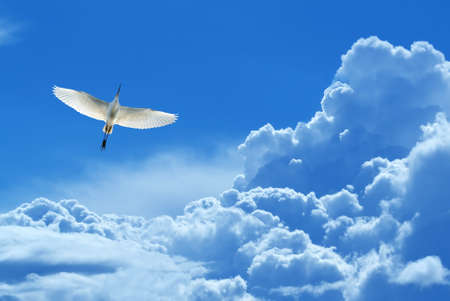 genera: Peaceful Tropical bird over blue sky background concept of hope and peace Stock Photo
