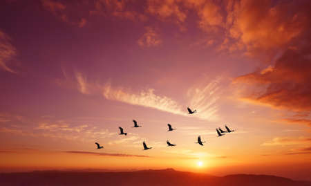 Birds flying against evening sunset in the background environment or ecology concept