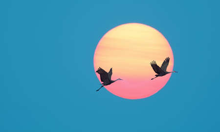 genera: Long-necked tropical birds against sun and blue sky background