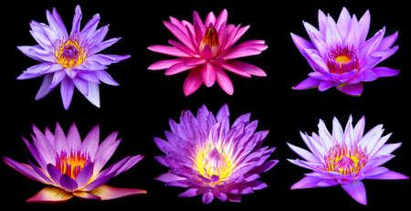spirituality: Set of beautiful purple lotus flower isolated on black background