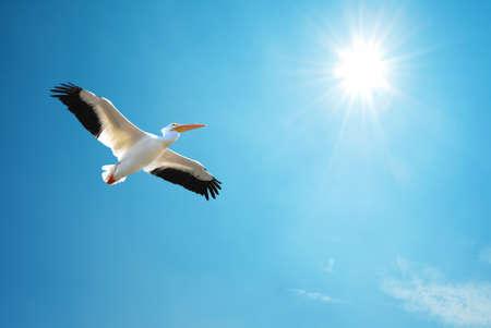 genera: Beautiful tropical bird in flight against blue sky