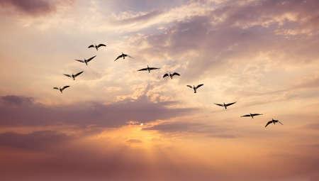 サンセットのパノラマ ビューで鳥の群れを空の背景