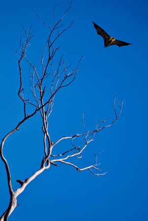 Halloween day with bat flying vertical image