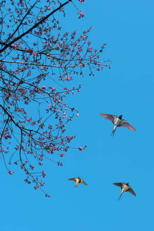 Barn Swallows on blue sky background vertical image