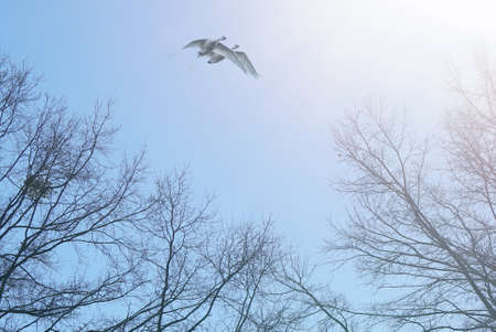Autumn tree and birds migration rural scene