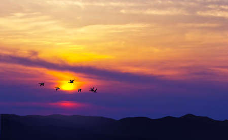 aspirational: Birds flying against evening sunset in the background environment or ecology concept