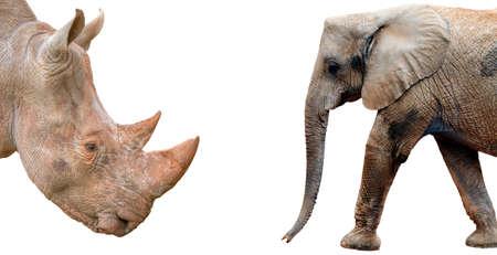 Elephant and Rhinoceros profiles on white background