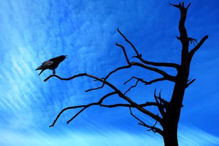 Halloween day with Raven Bird on dead tree