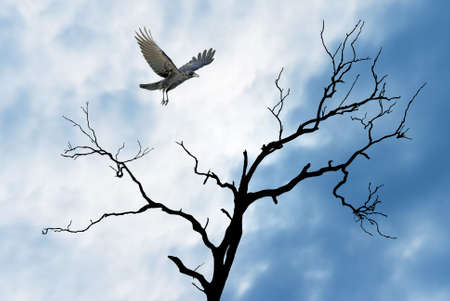 Halloween day with raven lands on branch of dry tree
