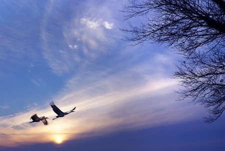 Les oiseaux volant contre le coucher du soleil du soir dans l'environnement de fond ou concept d'écologie Banque d'images - 82670653