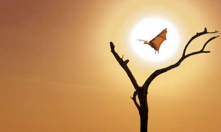 Halloween background with flying fox over bright yellow sky background Stock Photo