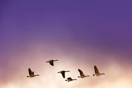 Beautiful sky on sunset or sunrise with flying birds natural background with copy space Stock Photo