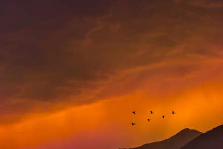 Oiseaux survolant le coucher du soleil du soir dans le fond de l & # 39 ; environnement ou le concept de l & Banque d'images - 84137980