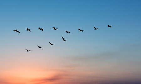 美しいパノラマの景色を明るい空に対して便ペリカン