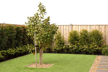 Landscaping combinations of artificial grass and plants, back yard exterior design