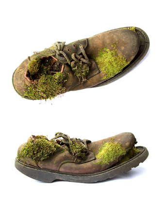 Top and front view of old brown shoe, split at the front, with green moss growing in and on it Banque d'images - 144209015