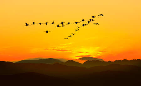 Birds at sunrise or sunset autumn concept