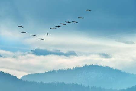 Birds flying against blue sky in the background environment or ecology concept Stock Photo - 155342082