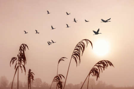 Beautiful sky on sunset or sunrise with flying birds natural background Banco de Imagens