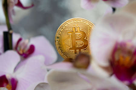 Bit coin among flowers, purple and pink orchids