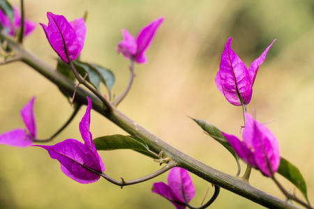 Purple plants photo