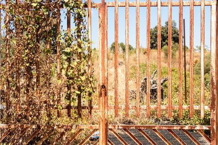 vegatation: rusty gate in a field with vegatation on it