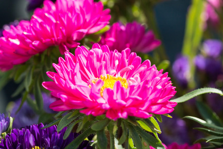 Close - up of big purple flower photo