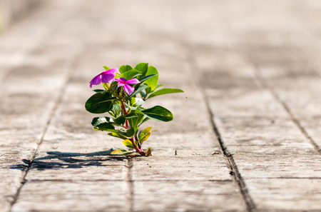 small plant in spontaneously born between tiles photo
