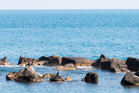 ionian: Cormorants on the rocks on the ionian sea Sicily