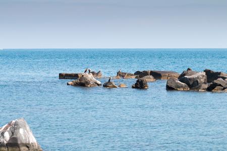Cormorants on the rocks on the ionian sea Sicily