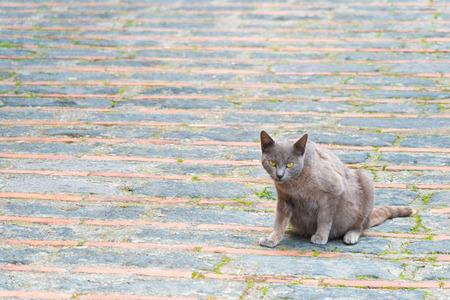Cat alone in a small sicilian village