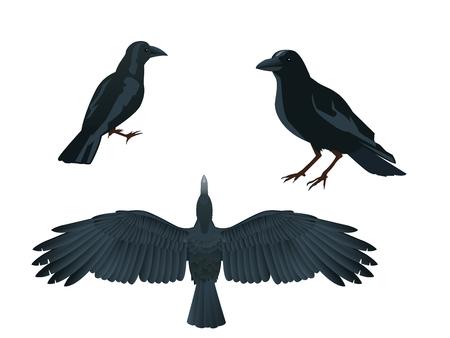 blackbird: illustration of raven