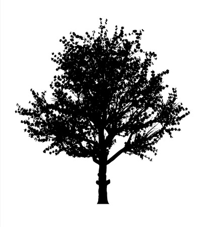 red apple tree silhouette Vector