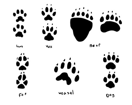 this is a set of animal footprints Vector