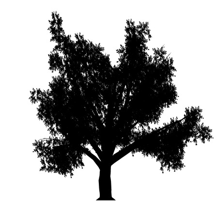 linden tree: this an linden tree silhouette  White-space shapes beetween branches
