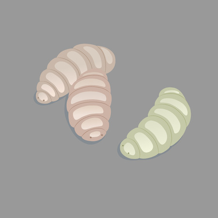 ugliness: This is a vector illustration of maggots