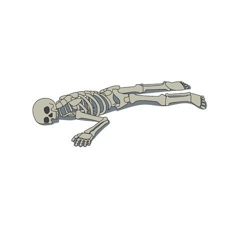 metatarsal: This is an illustration of laying skeleton