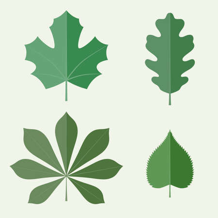 oak: Leaves in flat style. Vector icons set