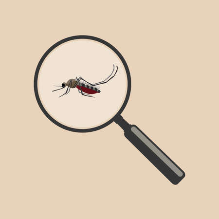 malaria: Mosquito with magnifier in flat style. Vector illustration insect. Illustration