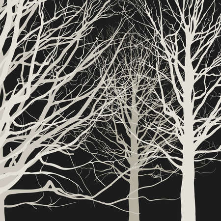 tree silhouette: Trees on black background. illustration of the forest Illustration
