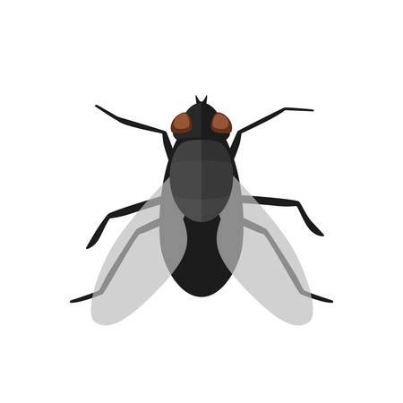 musca: Fly icon in flat style. Vector simple illustration of housefly on white background.
