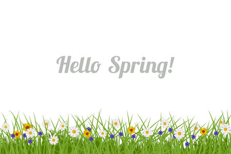 Spring and Summer background. Illustration with green grass and flowers Illustration