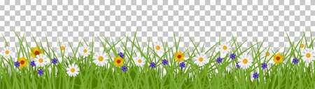 Grass summer background. Spring and Summer Illustration with flowers