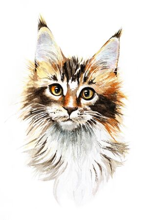 Watercolor MaineCoon Cat Hand Drawn Pet Portrait Illustration isolated Stock Photo