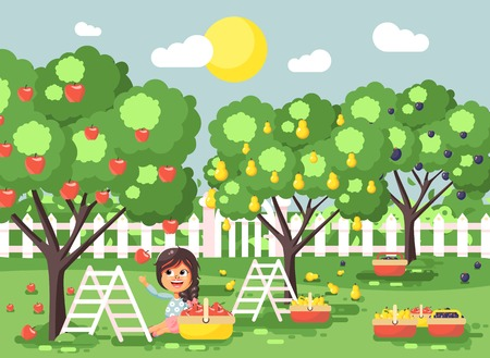 Vector illustration cartoon characters child brunette little girl harvest ripe fruit autumn orchard garden from plum, pear, apple tree, put crop in full basket landscape scene outdoor flat style