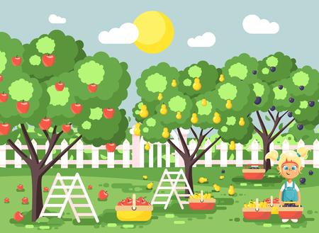 Vector illustration cartoon characters child blonde little girl harvest ripe fruit autumn orchard garden from plum, pear, apple tree, put crop in full basket landscape scene outdoor flat style