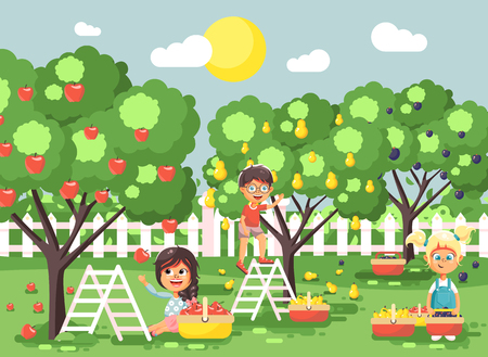 Vector illustration cartoon characters children boys and girls harvest ripe fruits autumn orchard garden from plum, pear, apple trees, put crop in full basket landscape scene outdoor flat style