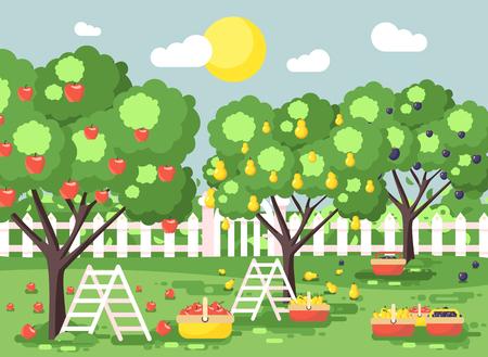Vector illustratie cartoon oogsten rijp fruit herfst boomgaard tuin met trapladders pruimen, peren, appels bomen, zet gewas in volle manden, groen landschap scène buiten achtergrond vlakke stijl Stockfoto