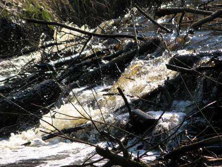 Falls on small rivers in center of wood. photo