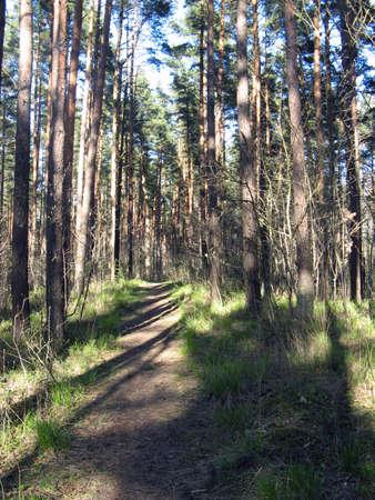 Forest scenery shot taken along near  lake. Stock Photo - 2920419